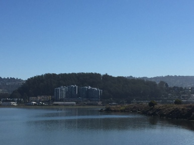View of Albany Hill from the Albany Bulb, photo by Claire McNally