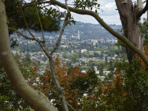 Campanile on UCB campus, clouds, poison oak from Albany Hill, June 2015, photo by Margot Cunningham