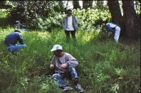 workday, W side Albany Hill, June 1998; pulling thistle? Dave MacFarland in white hat in front, Margot Cunningham in back on right; photo by Barbara Ertter