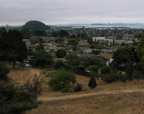 view of Albany Hill from El Cerrito Hillside Natural Area